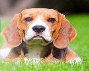 Cabinet Medical Veterinar Creative Vet-Zone - Dr. Filip Ilie Alin