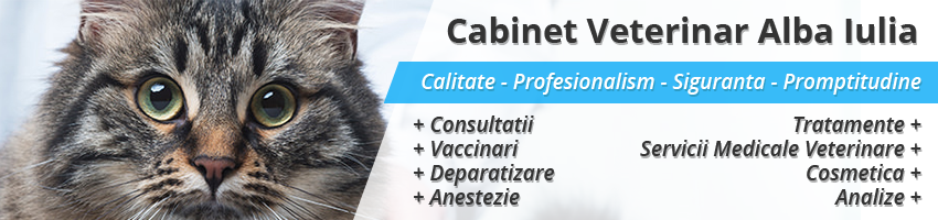 Canis Vet - Cabinet Medical Veterinar